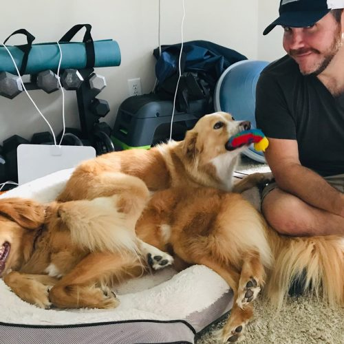 two content canines play with Michael during their canine message appointment