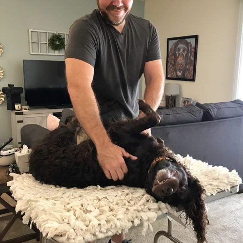 dog receiving needed adjustment via canine massage therapy