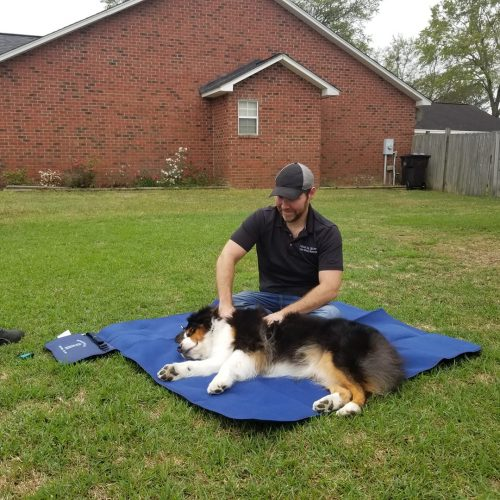canine massage therapy in action on satisfied dog client