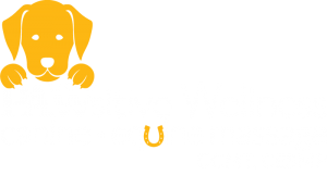 Pawsitive Wellness Canine Massage Michalel Daly